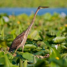 Birdwatching Tour in the Danube Delta - Private