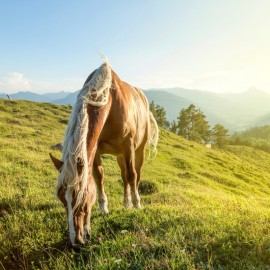Horse Riding for beginners, in the Carpathian Mountains, 4d/3n full board - Private