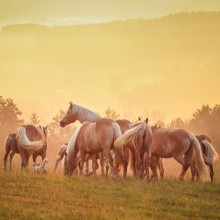 Exquisite Horse Riding in the Carpathian Mountains, 3d/2n full board - Private
